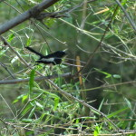Bird watching in Madhya Pradesh
